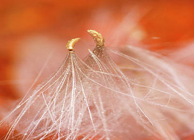 Usa, New Hampshire, Seedheads Dancing Art Print by Jaynes Gallery