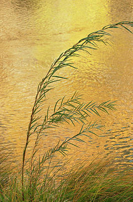 Usa, New Mexico Grass And Sky Print by Jaynes Gallery