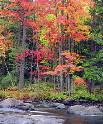 Lichens Photograph - Usa, New York, Autumn In The Adirondack by Jaynes Gallery