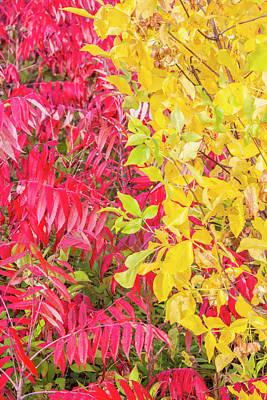 Sumac Tree Photograph - Usa, Ogle County, Illinois, Autumn by Elizabeth Boehm