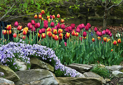 Phlox Photograph - Usa, Ohio Tulips And Phlox by Jaynes Gallery