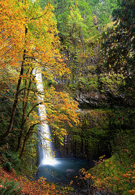Usa, Oregon A Bigleaf Maple (acer Art Print
