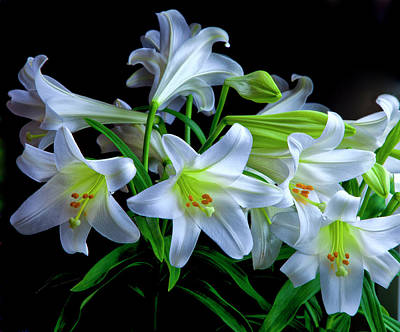 Carter Photograph - Usa, Oregon Close-up Of Easter Lilies by Jaynes Gallery