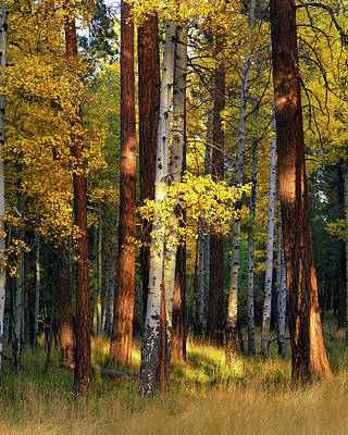 Large Format Photograph - Usa, Oregon, Deschutes National Forest by Jaynes Gallery