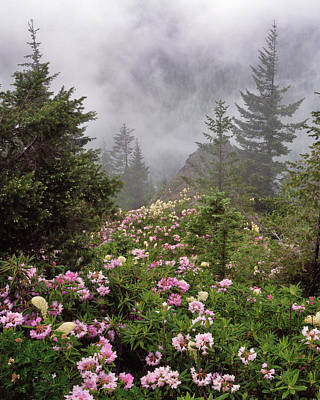 Usa, Oregon, Mt Hood National Forest Art Print by Jaynes Gallery