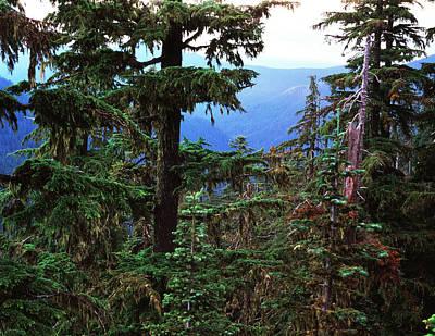 Opal Photograph - Usa, Oregon, Opal Creek Wilderness by Scott T. Smith
