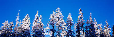 Winter Trees Photograph - Usa, Oregon, Pine Trees, Winter by Panoramic Images