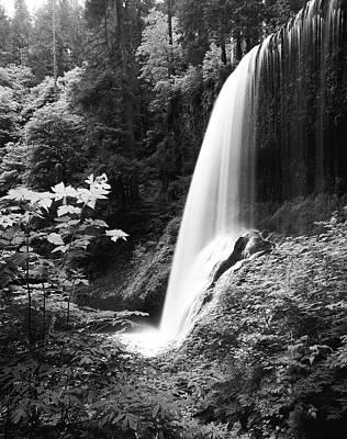 Large Format Photograph - Usa, Oregon, Silver Falls State Park by Adam Jones