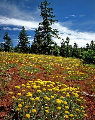 Usa, Oregon, Wallowa-whitman National Art Print