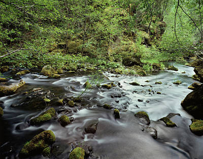 Usa, Pacific Northwest, A Stream Flows Art Print by Christopher Talbot Frank