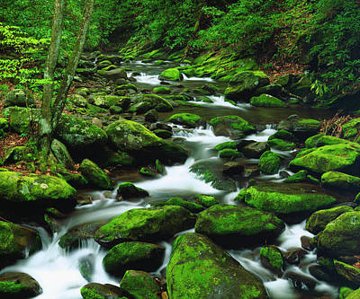 Usa, Tennessee, A Moss Covered Stream Art Print by Jaynes Gallery