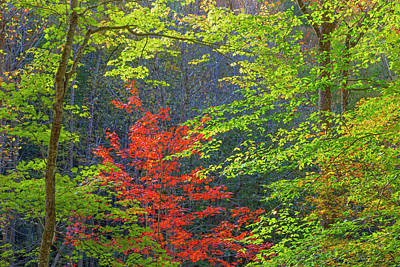 Green Cherokee Photograph - Usa, Tennessee Autumn Foliage by Jaynes Gallery