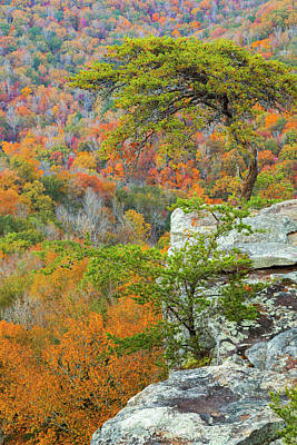 Buzzard Wall Art - Photograph - Usa, Tennessee, Fall Creek Falls State by Jaynes Gallery