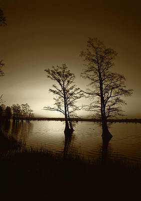 Usa, Tennessee, Reelfoot National Art Print by Adam Jones