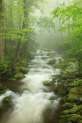 Usa, Tennessee, Stream In The Fog Art Print by Joanne Wells