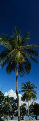 Usa, Us Virgin Islands, Saint Thomas Art Print by Panoramic Images