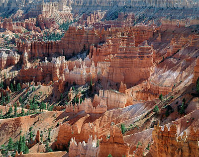 Large Format Photograph - Usa, Utah, View Of Bryce Canyon by Zandria Muench Beraldo