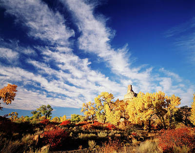 Rhus Photograph - Usa, Utah, View Of Rabbit Brush by Scott T. Smith