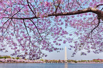 Jefferson Memorial Wall Art - Photograph - Usa, Washington Dc, Cherry Tree In by Tetra Images