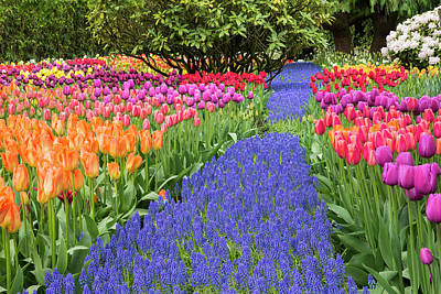 Usa, Washington Garden With Tulips Art Print by Jaynes Gallery