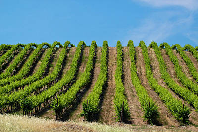 Usa, Washington, Rolling Vineyards Art Print by Terry Eggers