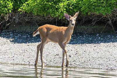 Manzanita Photograph - Usa, Washington State, Bainbridge Island by Trish Drury