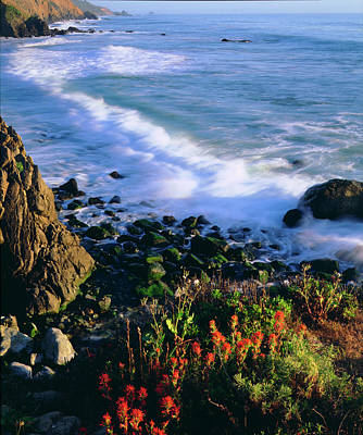 Central Coast Photograph - Usa, Wildflowers Along The California by Jaynes Gallery