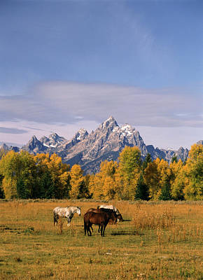 Grazing Horse Photograph - Usa, Wyoming, Horses In Grand Teton by Stuart Westmorland