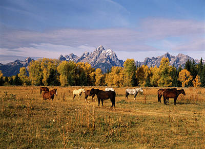 Usa, Wyoming, Horses On Moran Junction Art Print by Stuart Westmorland