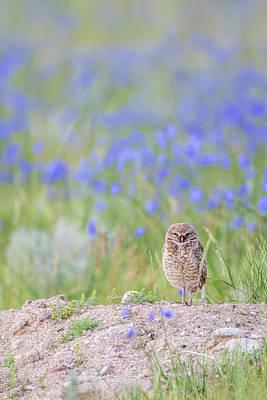 Burrowing Owl Photograph - Usa, Wyoming, Sublette County, An Adult by Elizabeth Boehm