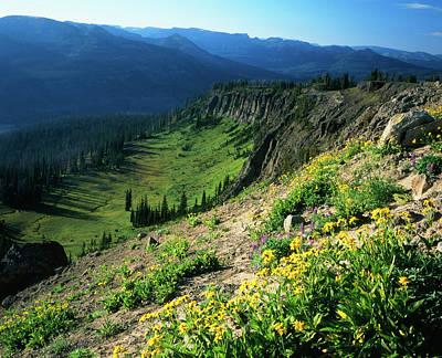 Absaroka Photograph - Usa, Wyoming, Wildflowers by Scott T. Smith