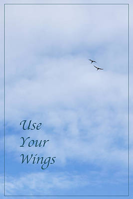 Photograph - Use Your Wings by Liz  Alderdice