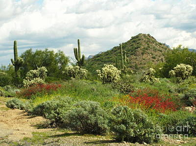 Photograph - Usery Mountain Springtime by Marilyn Smith