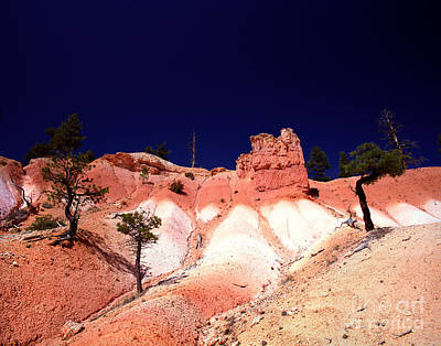 Photograph - Utah - Bryce Canyon National Park - Queens Garden 4 by Terry Elniski