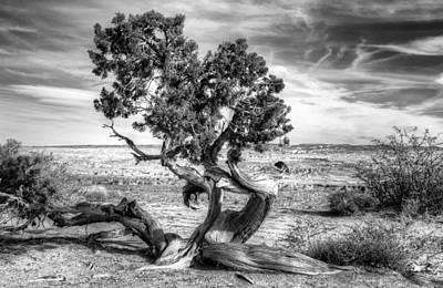 Utah Desert Survivor Art Print by Geraldine Alexander