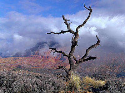 Pinion Photograph - Utah Usa Pinyon Pine Snag Above Virgin by Scott T. Smith
