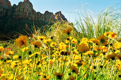 Photograph - Utah Wildflowers by Allen Beatty