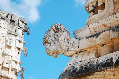 Photograph - Uxmal Mayan Ancient Turtle Glyph Profile by Shawn O'Brien