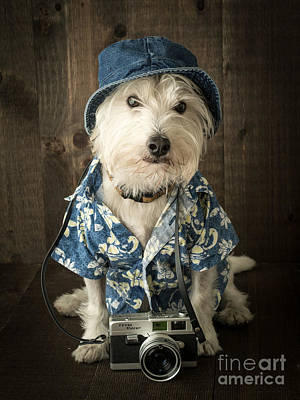 Cute Puppy Photograph - Vacation Dog by Edward Fielding