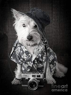 Vacation Dog With Camera And Hawaiian Shirt Art Print