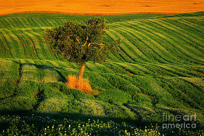 Val D'orcia Tree Art Print by Inge Johnsson
