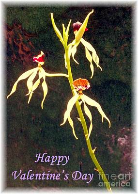 Photograph - Valentine Card With Graceful Orchid Trio by Barbie Corbett-Newmin
