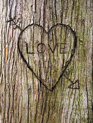 Carving Photograph - Valentine Tree by Diane Diederich