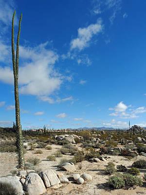Photograph - Valle De Cirios Pan 4 by Jeff Brunton
