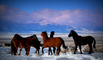 Photograph - Valley Of The Wild Horses  by Jeanne  Bencich-Nations