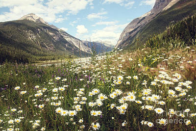 Photograph - Valley Of Wild Flowers In The Rocky Mountains by Sandra Cunningham