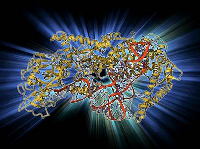 Trna Photograph - Valyl-trna Synthetase Molecule by Laguna Design