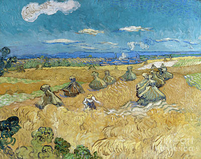 Painting - Van Gogh Wheatfields by Granger