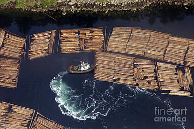 Photograph - Vancouver Island Logging by Inge Riis McDonald