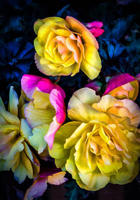 Vancouver Island Roses Art Print